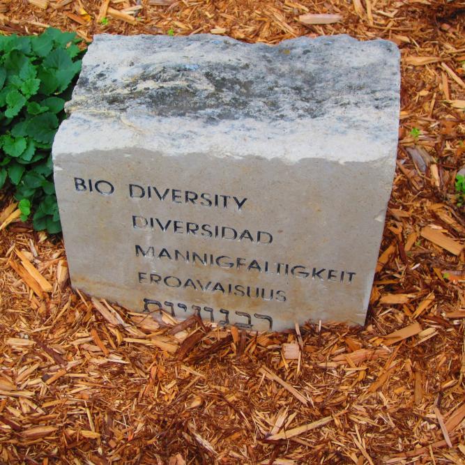 Biodiversity Rock